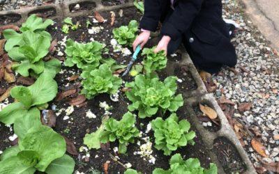 Gemüse aus eigenem Anbau